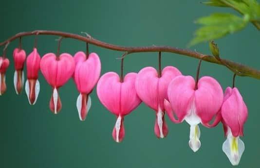 saison de l'amour